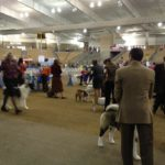 Dog Show is a Pet Lover's Dream