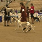 Dog Show is a Pet Lover's Dream 4