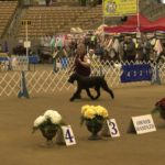 Dog Show is a Pet Lover's Dream 3