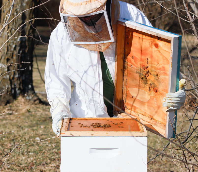 Beekeeping in Johnson County 6