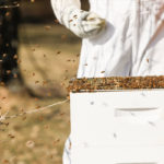 Beekeeping in Johnson County 5