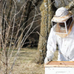 Beekeeping in Johnson County 10