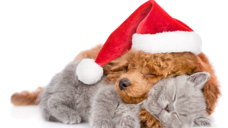 2019 Holiday Pet Wish List 15