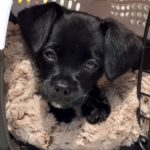 Who Rescued Who? Lucky Pets Find Forever Homes With Loving Locals 5
