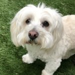 Who Rescued Who? Lucky Pets Find Forever Homes With Loving Locals 1