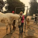 Connecting Community: BIG Heart Ranch Sparks Healing Nature 11