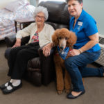 Meet Local Therapy Animals