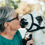 Meet Local Therapy Animals 37