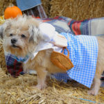 Fall Pet Festival at Ramapo-Bergen Animal Refuge 5