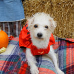 Fall Pet Festival at Ramapo-Bergen Animal Refuge 1