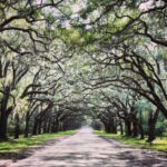 Top Seven Instagrammable Locations in Georgia State Parks 15