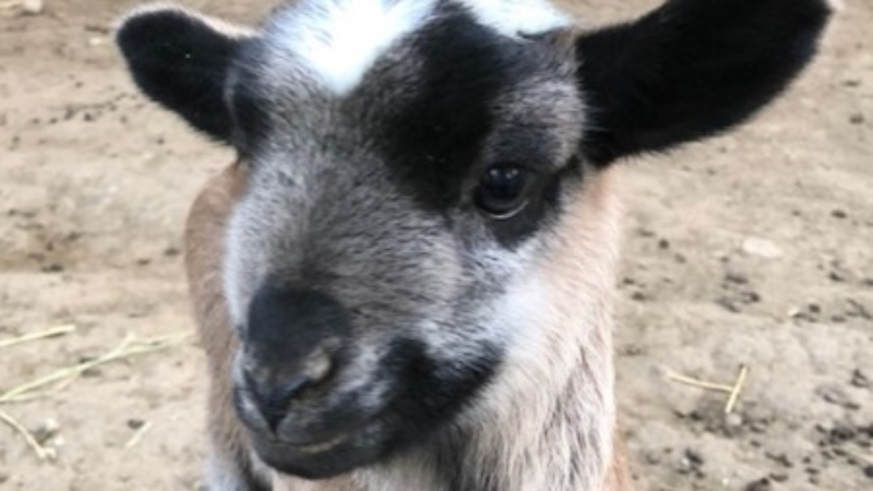 Foundation Fosters Flock for Service