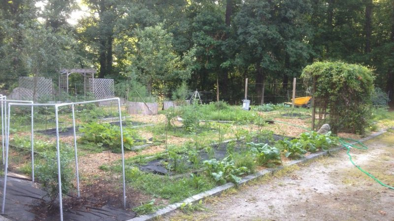 The Sustainable Garden at The Lovett School 4