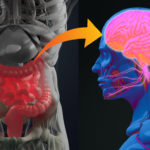 Why Your Gut Is Your Second Brain... 1