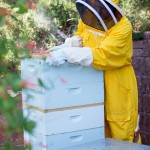 Bee-ing Sustainable 2