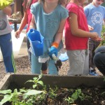 Preschoolers Learning Sustainability Through Gardening 3