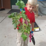 Preschoolers Learning Sustainability Through Gardening 2