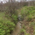 WIld Birds Unlimited Shoal Creek Cleanup